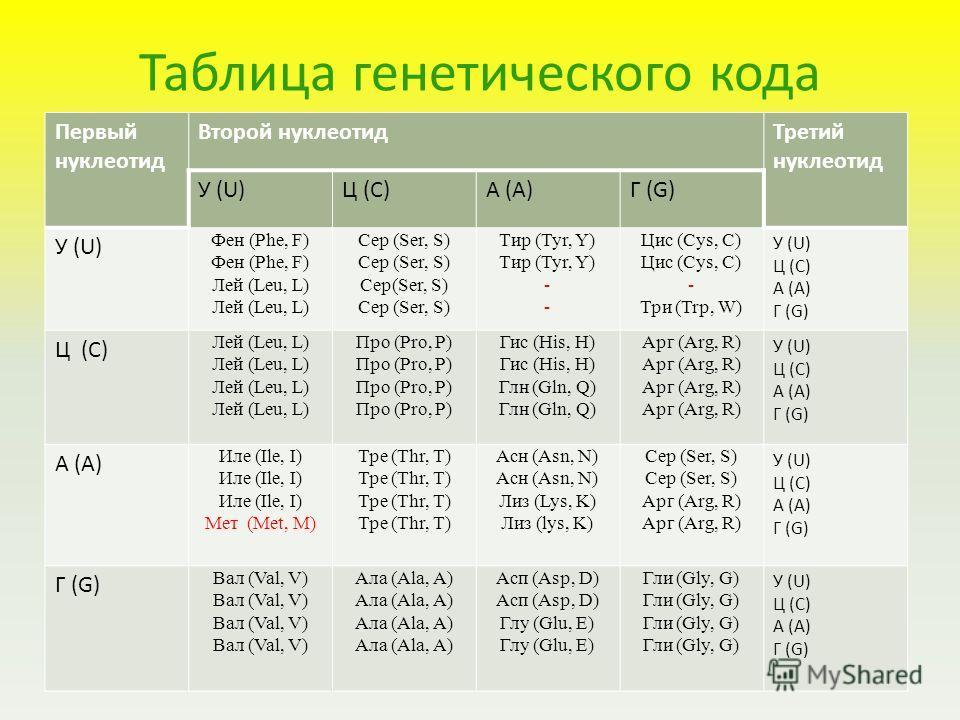 Таблица генетического кода Первый нуклеотид Второй нуклеотидТретий нуклеотид У (U)Ц (C)А (A)Г (G) У (U) Фен (Phe, F) Лей (Leu, L) Сер (Ser, S) Тир (Tyr, Y) - Цис (Cys, C) - Три (Trp, W) У (U) Ц (C) A (A) Г (G) Ц (C) Лей (Leu, L) Про (Pro, P) Гис (His