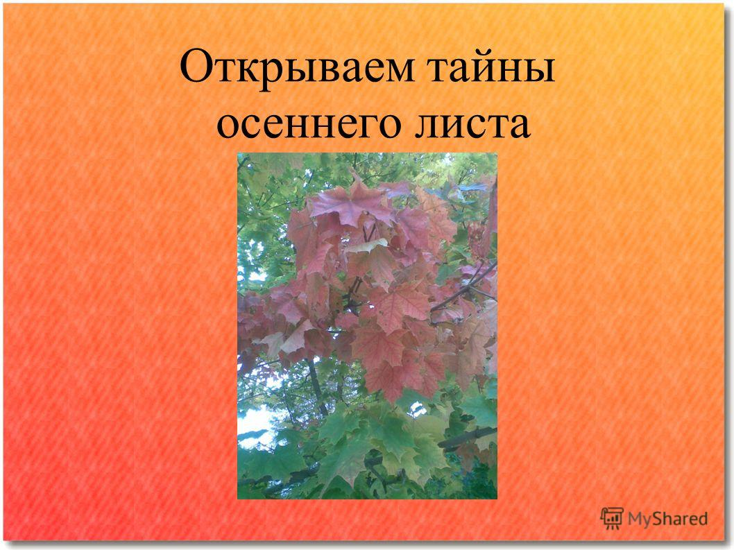 Открываем тайны осеннего листа