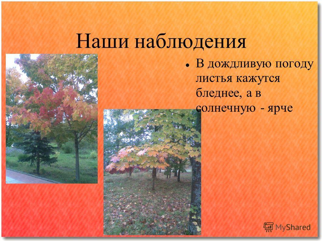 Наши наблюдения В дождливую погоду листья кажутся бледнее, а в солнечную - ярче