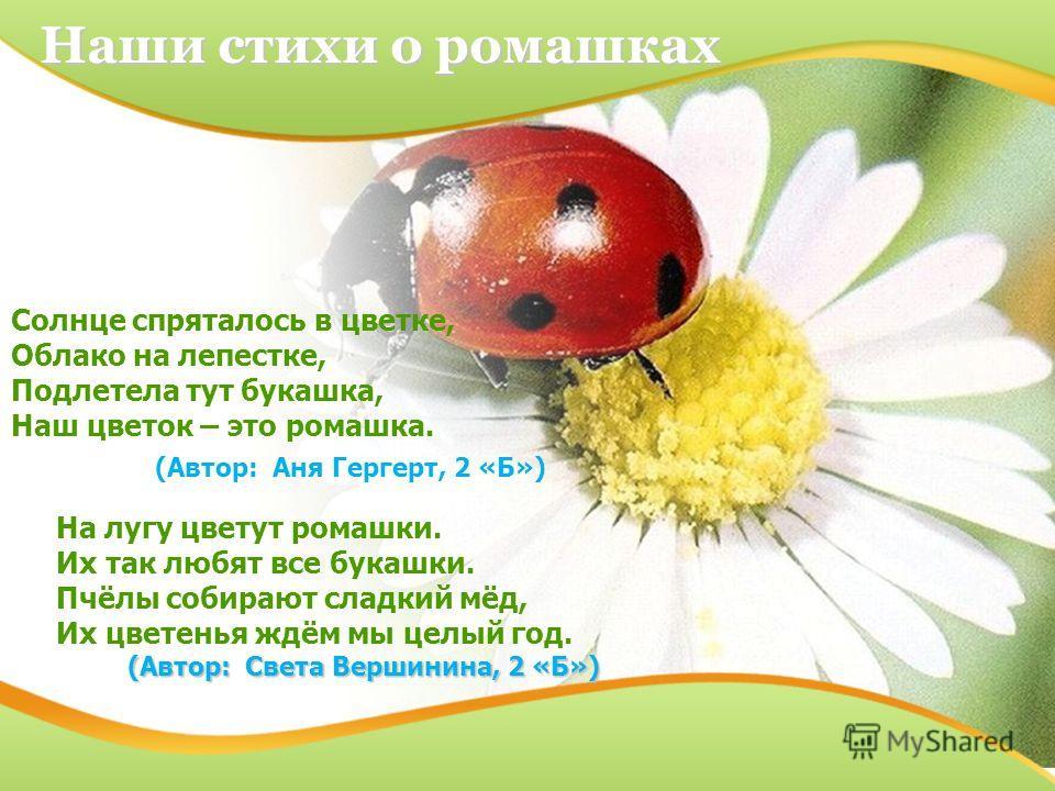 Солнце спряталось в цветке, Облако на лепестке, Подлетела тут букашка, Наш цветок – это ромашка. (Автор: Аня Гергерт, 2 «Б») Наши стихи о ромашках На лугу цветут ромашки. Их так любят все букашки. Пчёлы собирают сладкий мёд, Их цветенья ждём мы целый