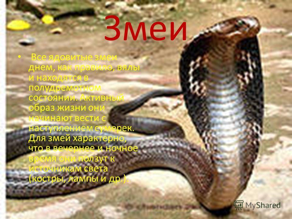 Змеи Все ядовитые змеи днем, как правило, вялы и находятся в полудремотном состоянии. Активный образ жизни они начинают вести с наступлением сумерек. Для змей характерно, что в вечернее и ночное время они ползут к источникам света (костры, лампы и др