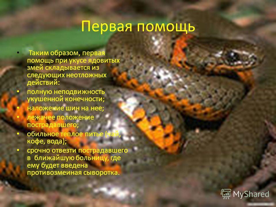 Первая помощь Таким образом, первая помощь при укусе ядовитых змей складывается из следующих неотложных действий: полную неподвижность укушенной конечности; наложение шин на нее; лежачее положение пострадавшего; обильное теплое питье (чай, кофе, вода