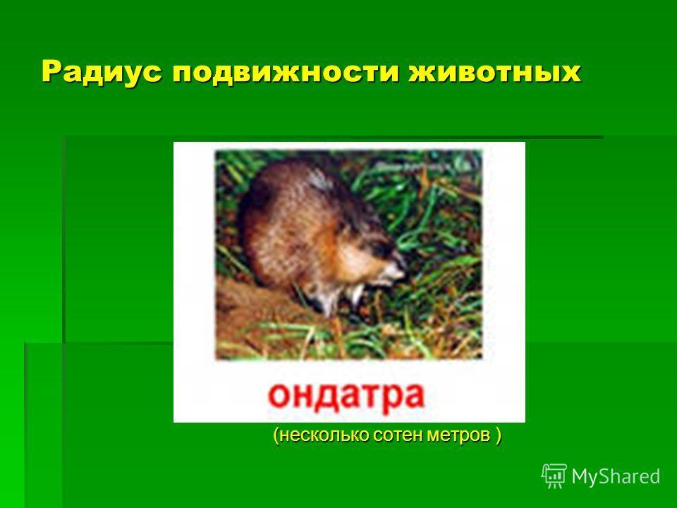 Радиус подвижности животных (несколько сотен метров )