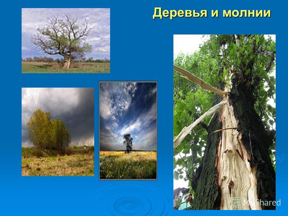 Деревья и молнии