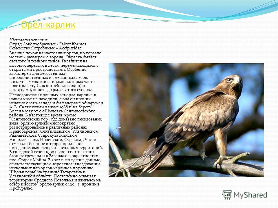Змееяд Circaetus gallicus Отряд Соколообразные - Falconiformes Семейство Ястребиные – Accipitridae Крупная большеголовая хищная птица с длинными крыльями. В нашем крае обитает в смешанных лесах с обширными полянами и вырубками и большой численностью