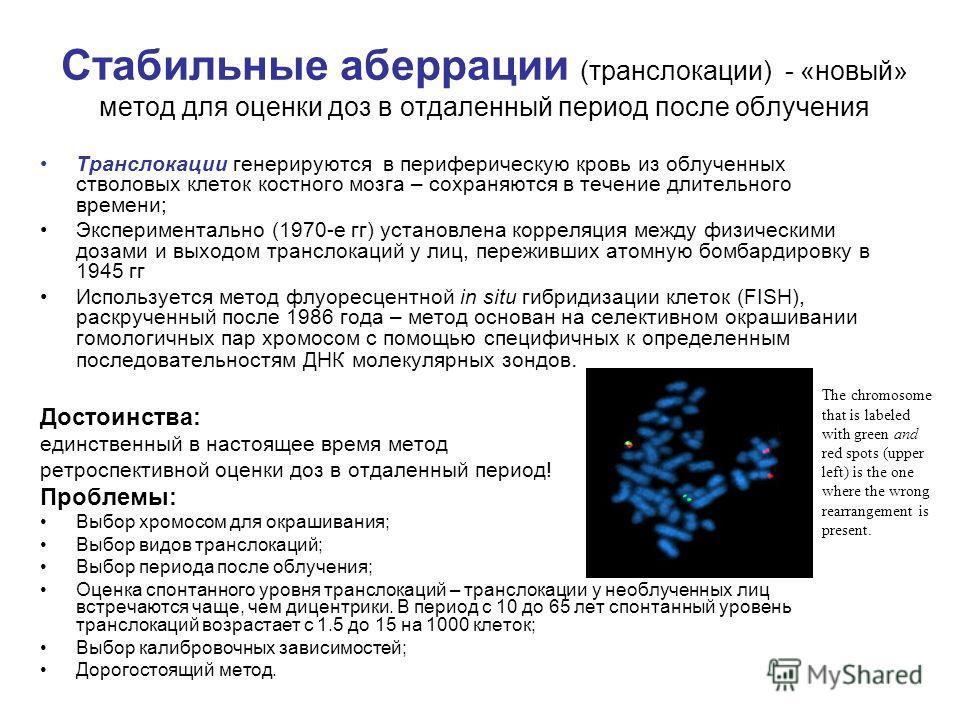 Стабильные аберрации (транслокации) - «новый» метод для оценки доз в отдаленный период после облучения Транслокации генерируются в периферическую кровь из облученных стволовых клеток костного мозга – сохраняются в течение длительного времени; Экспери