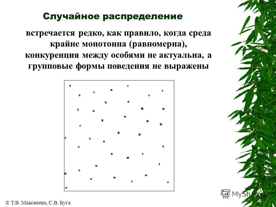 © Т.В. Маковеева, С.В. Буга Случайное распределение встречается редко, как правило, когда среда крайне монотонна (равномерна), конкуренция между особями не актуальна, а групповые формы поведения не выражены