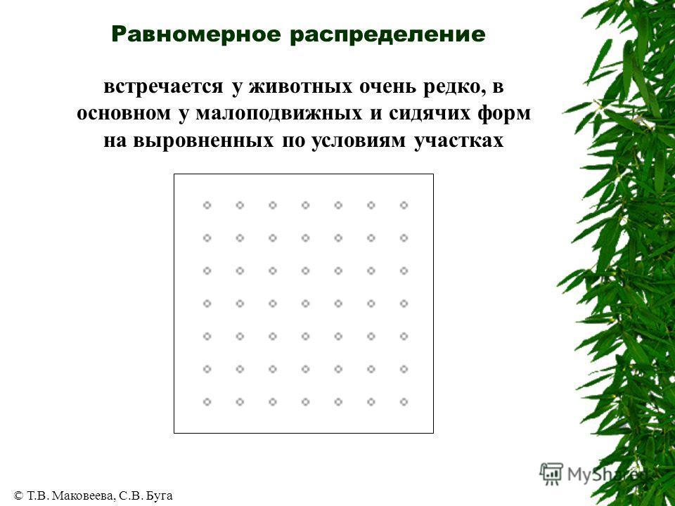 © Т.В. Маковеева, С.В. Буга Равномерное распределение встречается у животных очень редко, в основном у малоподвижных и сидячих форм на выровненных по условиям участках