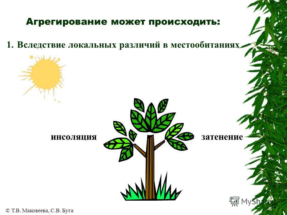 © Т.В. Маковеева, С.В. Буга Агрегирование может происходить: 1. Вследствие локальных различий в местообитаниях инсоляциязатенение