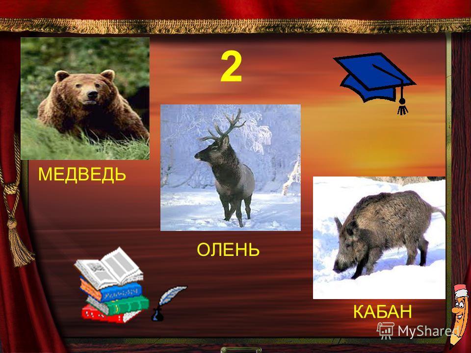 МЕДВЕДЬ КАБАН ОЛЕНЬ 2