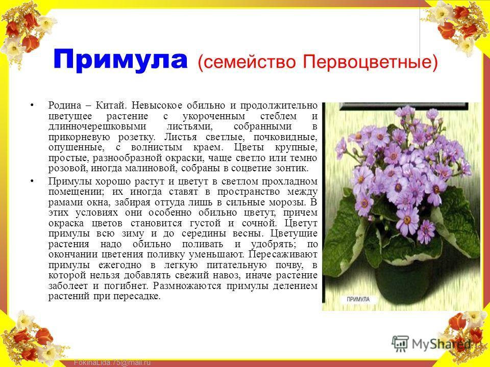 FokinaLida.75@mail.ru Примула (семейство Первоцветные) Родина – Китай. Невысокое обильно и продолжительно цветущее растение с укороченным стеблем и длинночерешковыми листьями, собранными в прикорневую розетку. Листья светлые, почковидные, опушенные,