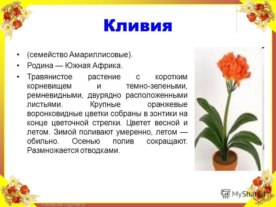 FokinaLida.75@mail.ru Кливия (семейство Амариллисовые). Родина Южная Африка. Травянистое растение с коротким корневищем и темно-зелеными, ремневидными, двурядно расположенными листьями. Крупные оранжевые воронковидные цветки собраны в зонтики на конц