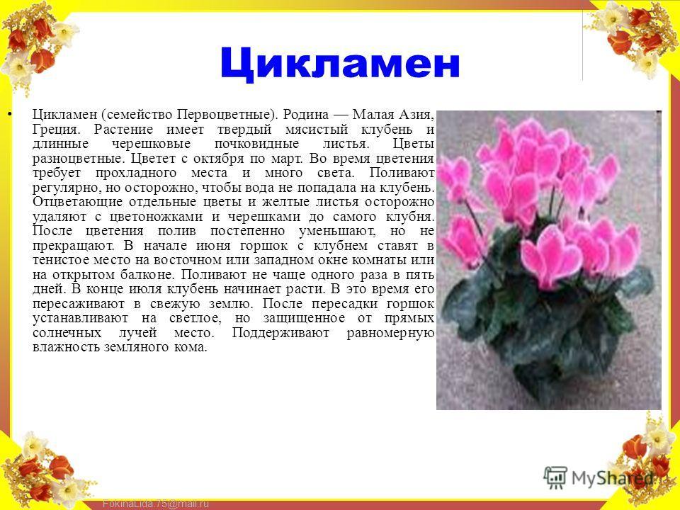 FokinaLida.75@mail.ru Цикламен Цикламен (семейство Первоцветные). Родина Малая Азия, Греция. Растение имеет твердый мясистый клубень и длинные черешковые почковидные листья. Цветы разноцветные. Цветет с октября по март. Во время цветения требует прох