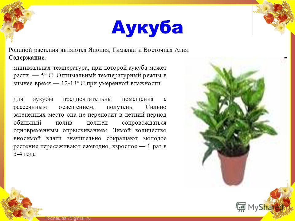 FokinaLida.75@mail.ru Аукуба Родиной растения являются Япония, Гималаи и Восточная Азия. Содержание. минимальная температура, при которой аукуба может расти, 5° С. Оптимальный температурный режим в зимнее время 12-13° С при умеренной влажности для ау