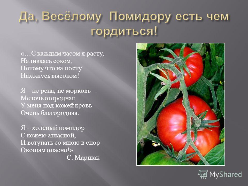 «… С каждым часом я расту, Наливаясь соком, Потому что на посту Нахожусь высоком ! Я – не репа, не морковь – Мелочь огородная. У меня под кожей кровь Очень благородная. Я – холёный помидор С кожею атласной, И вступать со мною в спор Овощам опасно !»