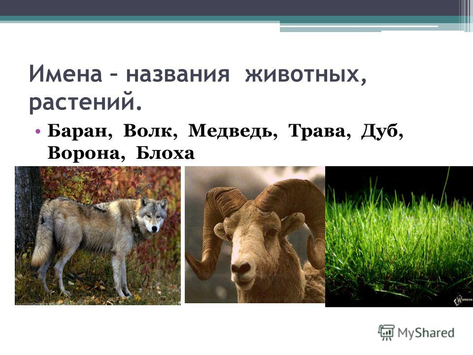 Имена – названия животных, растений. Баран, Волк, Медведь, Трава, Дуб, Ворона, Блоха