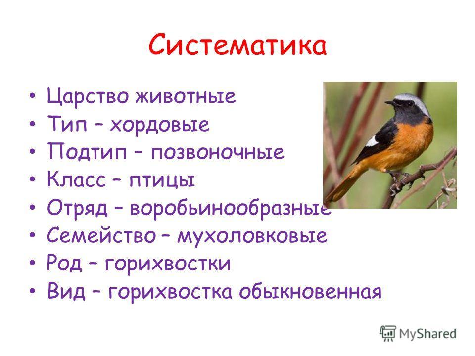 Систематика Царство животные Тип – хордовые Подтип – позвоночные Класс – птицы Отряд – воробьинообразные Семейство – мухоловковые Род – горихвостки Вид – горихвостка обыкновенная