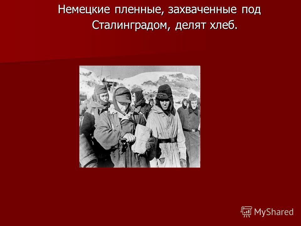 Немецкие пленные, захваченные под Сталинградом, делят хлеб.