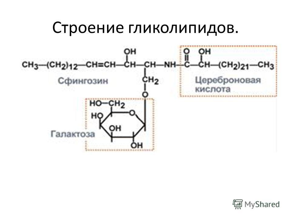Строение гликолипидов.
