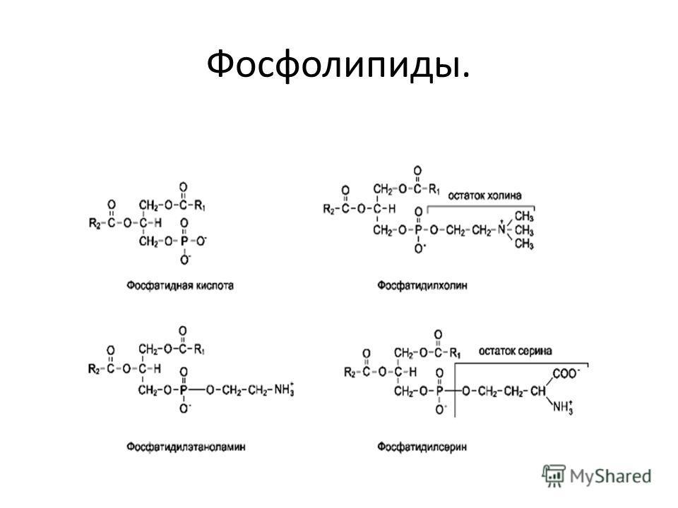 Фосфолипиды.