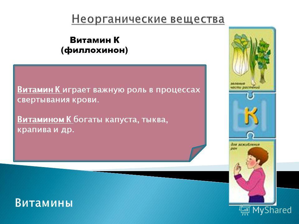 Витамины Витамин К (филлохинон) Витамин К играет важную роль в процессах свертывания крови. Витамином К богаты капуста, тыква, крапива и др.