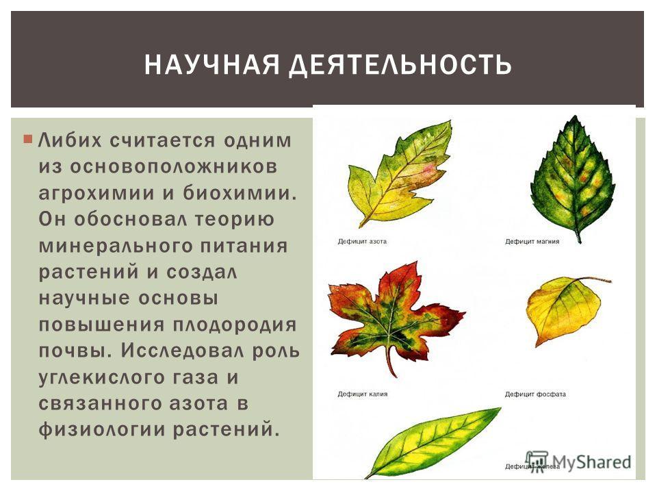 Либих считается одним из основоположников агрохимии и биохимии. Он обосновал теорию минерального питания растений и создал научные основы повышения плодородия почвы. Исследовал роль углекислого газа и связанного азота в физиологии растений. НАУЧНАЯ Д