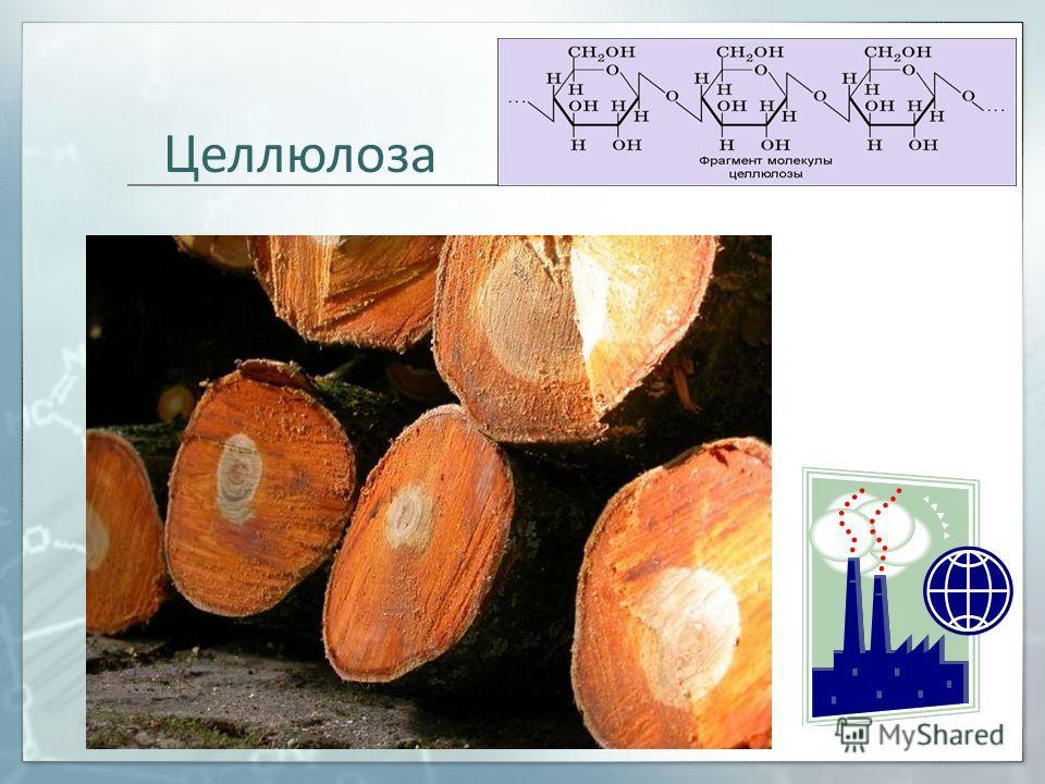 Назовите основной полисахарид клеточной стенки растений. вопрос 2