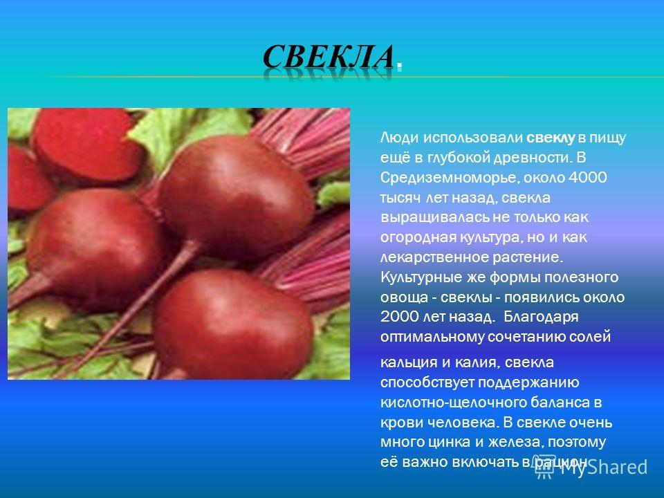 Люди использовали свеклу в пищу ещё в глубокой древности. В Средиземноморье, около 4000 тысяч лет назад, свекла выращивалась не только как огородная культура, но и как лекарственное растение. Культурные же формы полезного овоща - свеклы - появились о