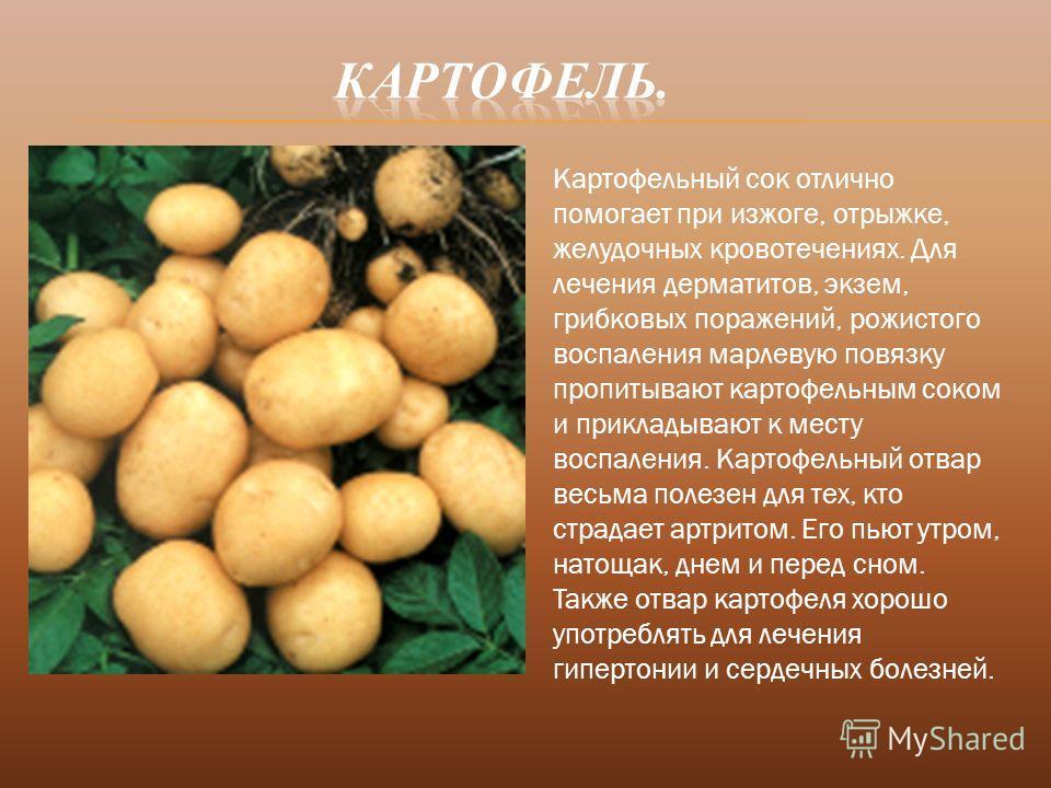 Картофельный сок отлично помогает при изжоге, отрыжке, желудочных кровотечениях. Для лечения дерматитов, экзем, грибковых поражений, рожистого воспаления марлевую повязку пропитывают картофельным соком и прикладывают к месту воспаления. Картофельный