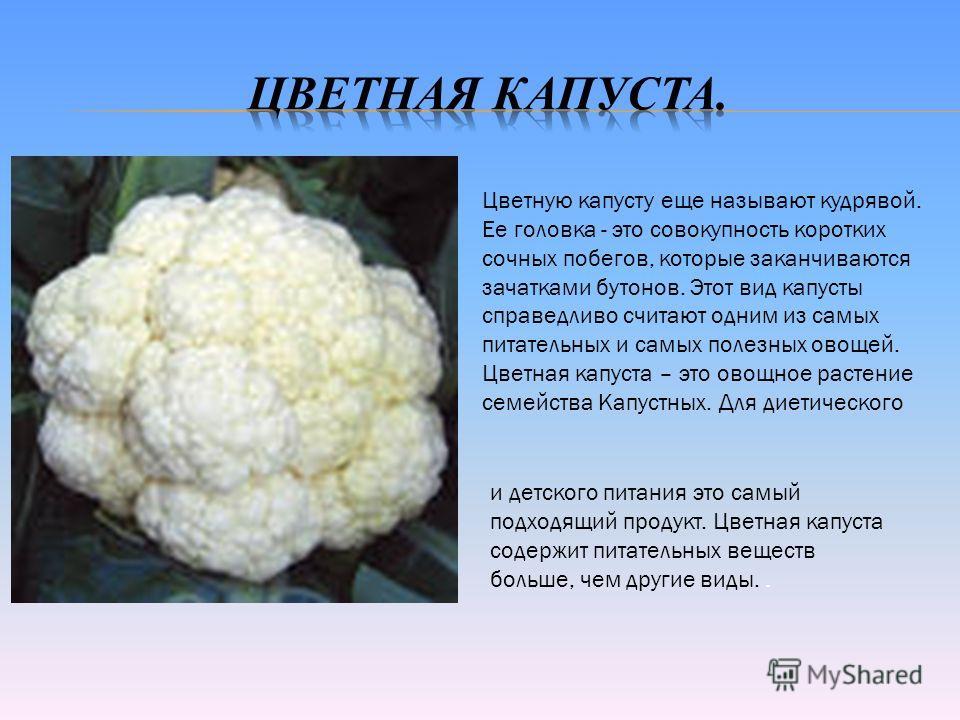 Цветную капусту еще называют кудрявой. Ее головка - это совокупность коротких сочных побегов, которые заканчиваются зачатками бутонов. Этот вид капусты справедливо считают одним из самых питательных и самых полезных овощей. Цветная капуста – это овощ