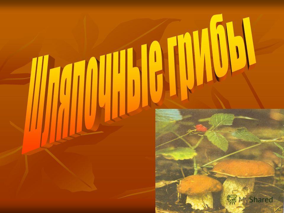 Тема урока грибы