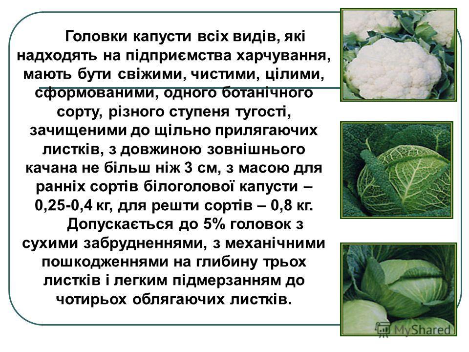 Головки капусти всіх видів, які надходять на підприємства харчування, мають бути свіжими, чистими, цілими, сформованими, одного ботанічного сорту, різного ступеня тугості, зачищеними до щільно прилягаючих листків, з довжиною зовнішнього качана не біл