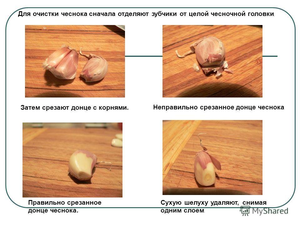 Для очистки чеснока сначала отделяют зубчики от целой чесночной головки. Затем срезают донце с корнями. Неправильно срезанное донце чеснока Правильно срезанное донце чеснока. Сухую шелуху удаляют, снимая одним слоем.