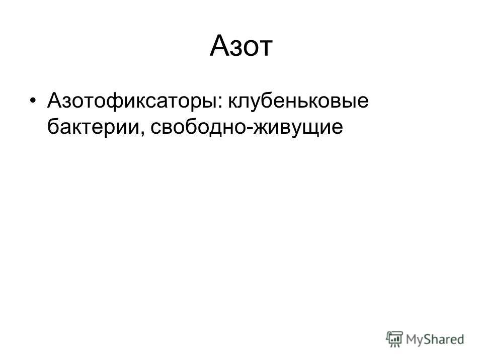 Азот Азотофиксаторы: клубеньковые бактерии, свободно-живущие