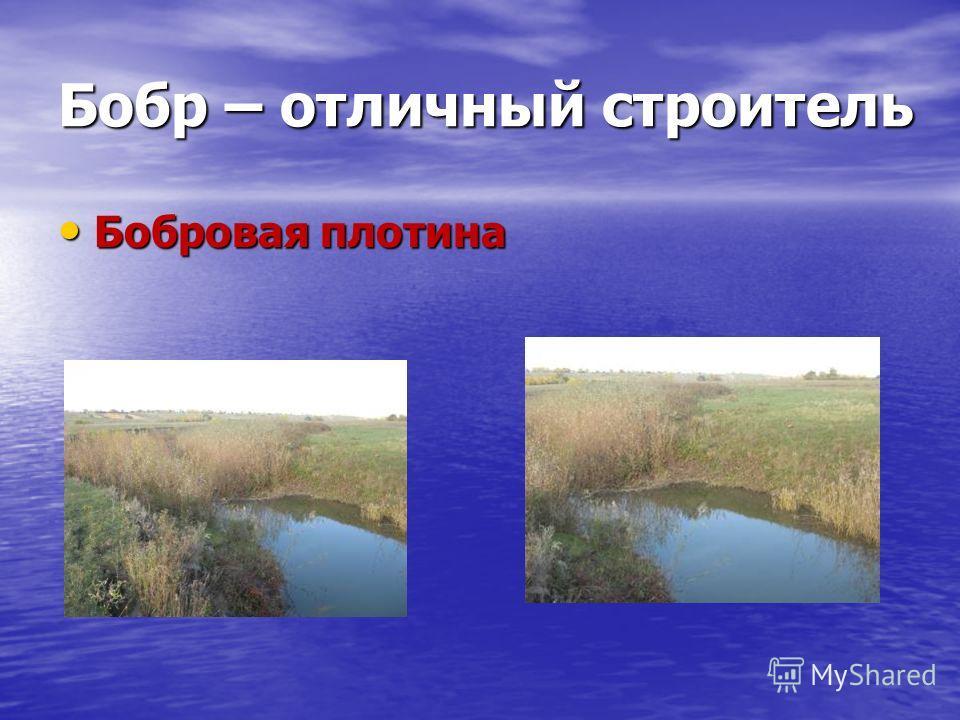 Бобровая плотина Бобровая плотина