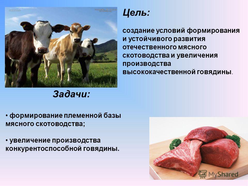 создание условий формирования и устойчивого развития отечественного мясного скотоводства и увеличения производства высококачественной говядины. Цель: Задачи: формирование племенной базы мясного скотоводства; увеличение производства конкурентоспособно