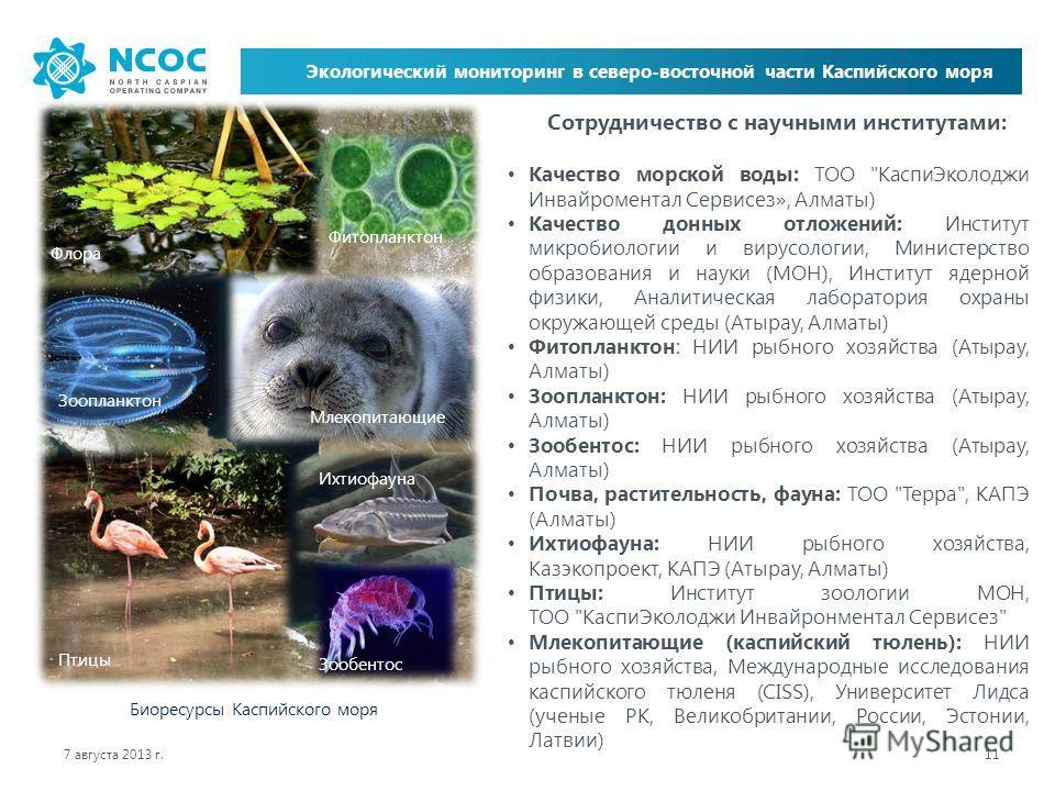7 августа 2013 г. 11 Экологический мониторинг в северо-восточной части Каспийского моря Биоресурсы Каспийского моря Флора Фитопланктон Зоопланктон Млекопитающие Птицы Ихтиофауна Зообентос Сотрудничество с научными институтами: Качество морской воды: