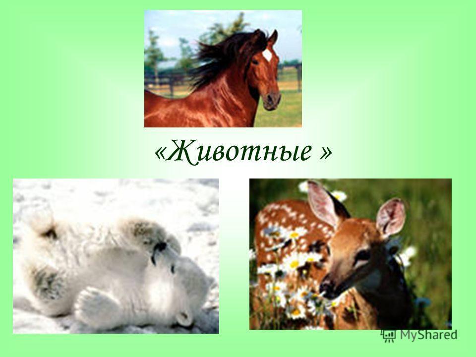 «Животные »