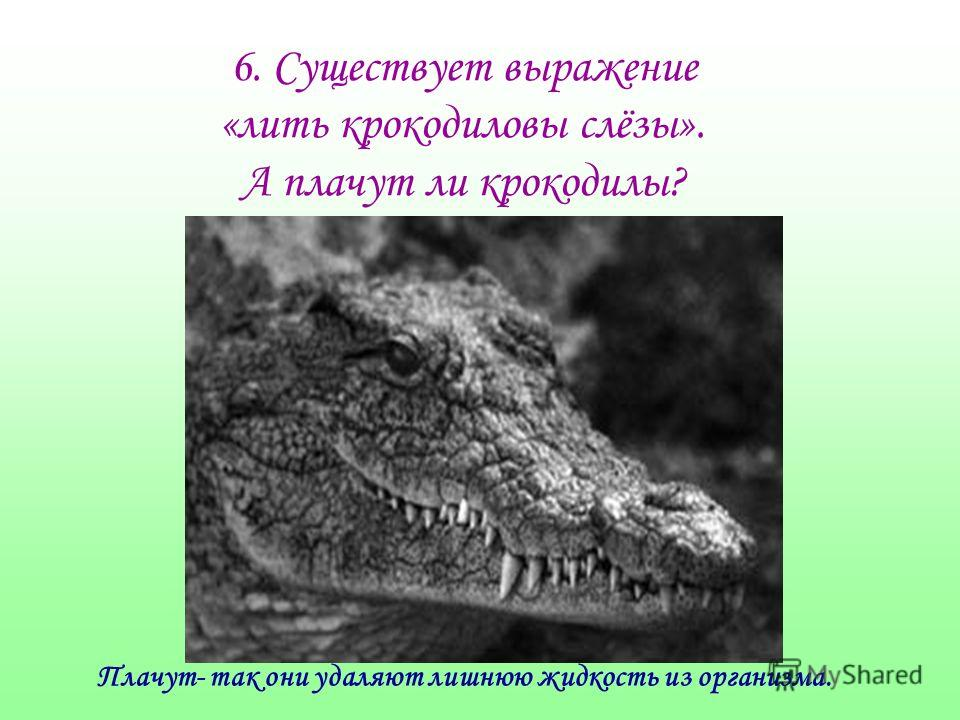 6. Существует выражение «лить крокодиловы слёзы». А плачут ли крокодилы? Плачут- так они удаляют лишнюю жидкость из организма.