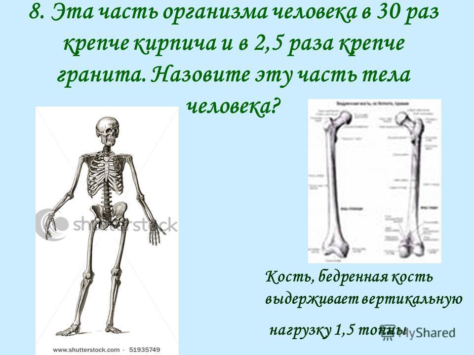 8. Эта часть организма человека в 30 раз крепче кирпича и в 2,5 раза крепче гранита. Назовите эту часть тела человека? Кость, бедренная кость выдерживает вертикальную нагрузку 1,5 тонны