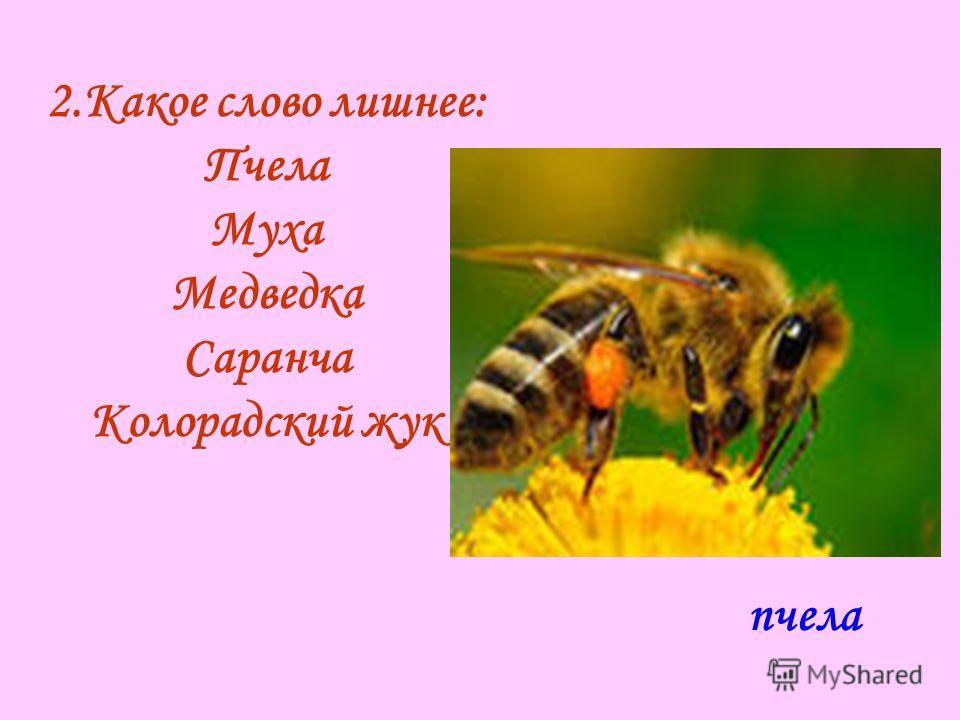 2.Какое слово лишнее: Пчела Муха Медведка Саранча Колорадский жук пчела