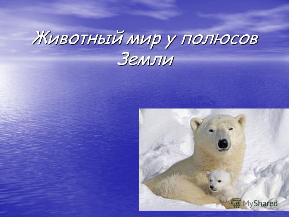 Животный мир у полюсов Земли