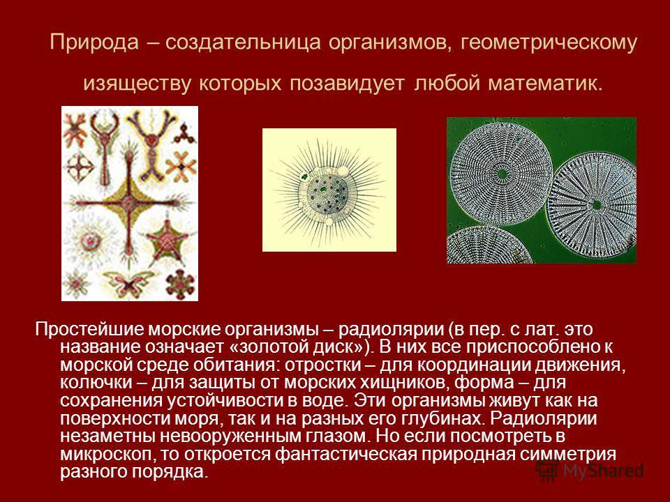 Природа – создательница организмов, геометрическому изяществу которых позавидует любой математик. Простейшие морские организмы – радиолярии (в пер. с лат. это название означает «золотой диск»). В них все приспособлено к морской среде обитания: отрост