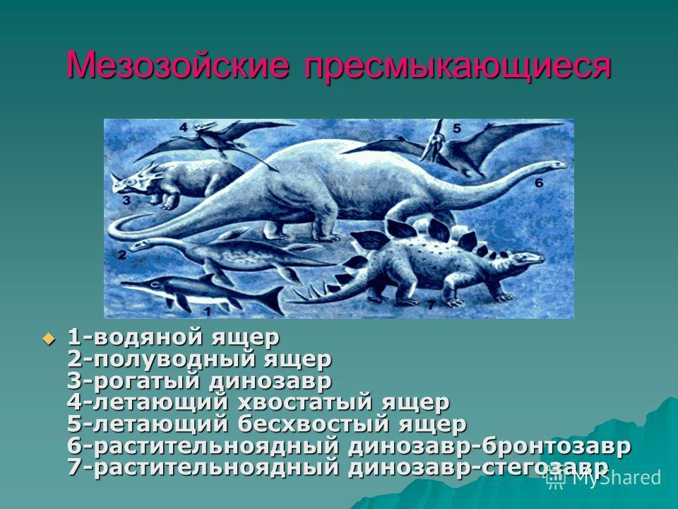 Мезозойские пресмыкающиеся 1-водяной ящер 2-полуводный ящер 3-рогатый динозавр 4-летающий хвостатый ящер 5-летающий бесхвостый ящер 6-растительноядный динозавр-бронтозавр 7-растительноядный динозавр-стегозавр 1-водяной ящер 2-полуводный ящер 3-рогаты
