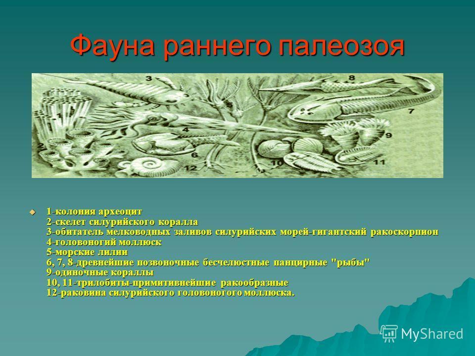 Фауна раннего палеозоя 1-колония археоцит 2-скелет силурийского коралла 3-обитатель мелководных заливов силурийских морей-гигантский ракоскорпион 4-головоногий моллюск 5-морские лилии 6, 7, 8-древнейшие позвоночные бесчелюстные панцирные