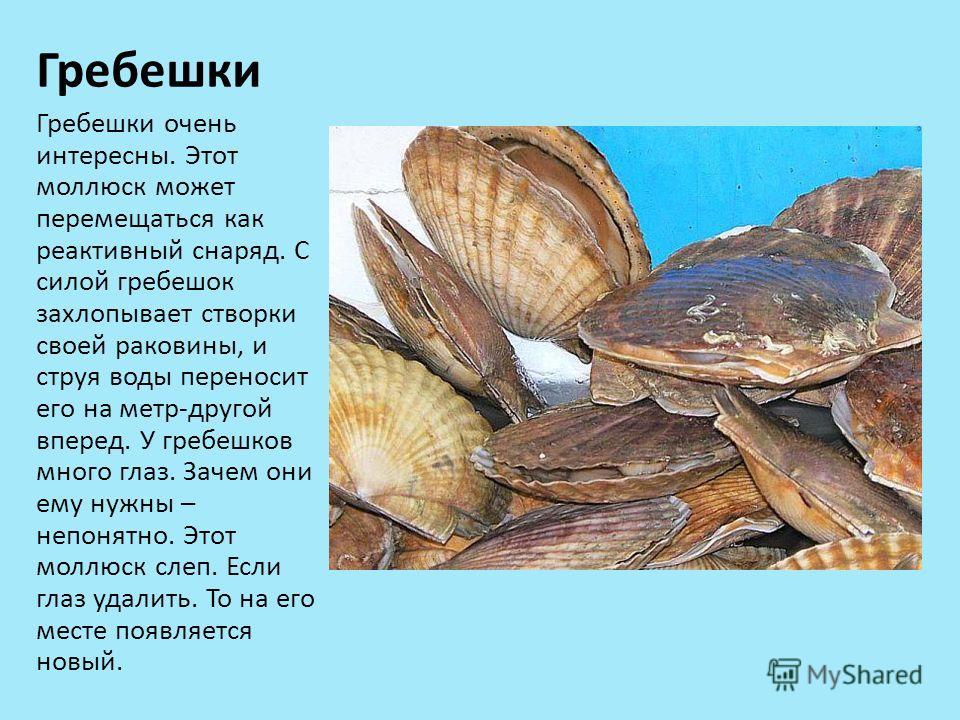 Гребешки Гребешки очень интересны. Этот моллюск может перемещаться как реактивный снаряд. С силой гребешок захлопывает створки своей раковины, и струя воды переносит его на метр-другой вперед. У гребешков много глаз. Зачем они ему нужны – непонятно.
