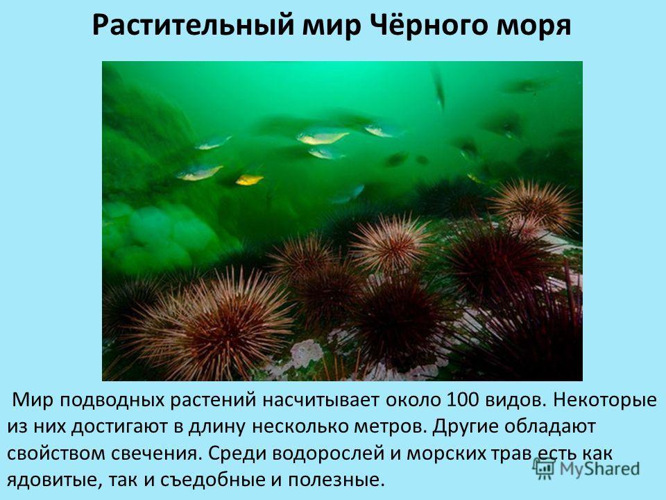 Растительный мир Чёрного моря Мир подводных растений насчитывает около 100 видов. Некоторые из них достигают в длину несколько метров. Другие обладают свойством свечения. Среди водорослей и морских трав есть как ядовитые, так и съедобные и полезные.