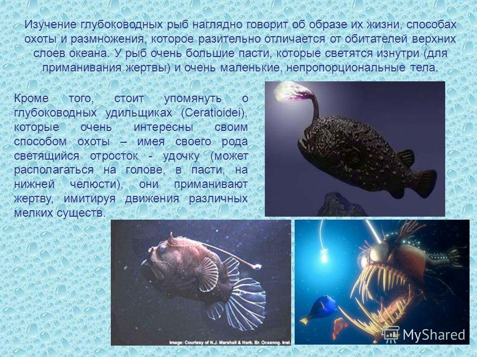 Изучение глубоководных рыб наглядно говорит об образе их жизни, способах охоты и размножения, которое разительно отличается от обитателей верхних слоев океана. У рыб очень большие пасти, которые светятся изнутри (для приманивания жертвы) и очень мале