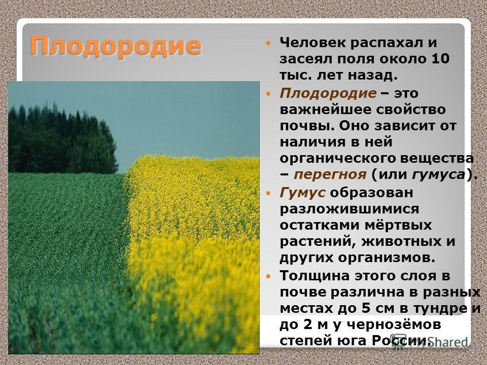 ПлодородиеПлодородие Человек распахал и засеял поля около 10 тыс. лет назад. Плодородие – это важнейшее свойство почвы. Оно зависит от наличия в ней органического вещества – перегноя (или гумуса). Гумус образован разложившимися остатками мёртвых раст