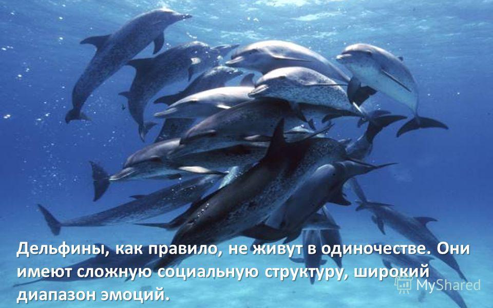 Дельфины, как правило, не живут в одиночестве. Они имеют сложную социальную структуру, широкий диапазон эмоций.